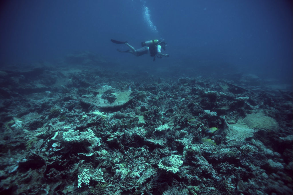 Diving on the Chagos archipelago.