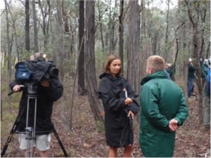 Local news team interviewing staff from Taronga Zoo at the release.