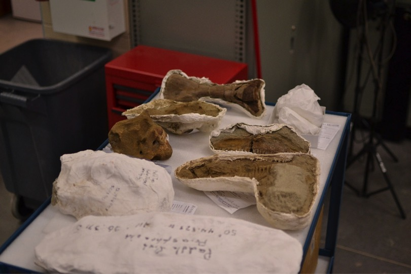 QMUL students' fossil finds newly arrived in the Royal Tyrrell Museum