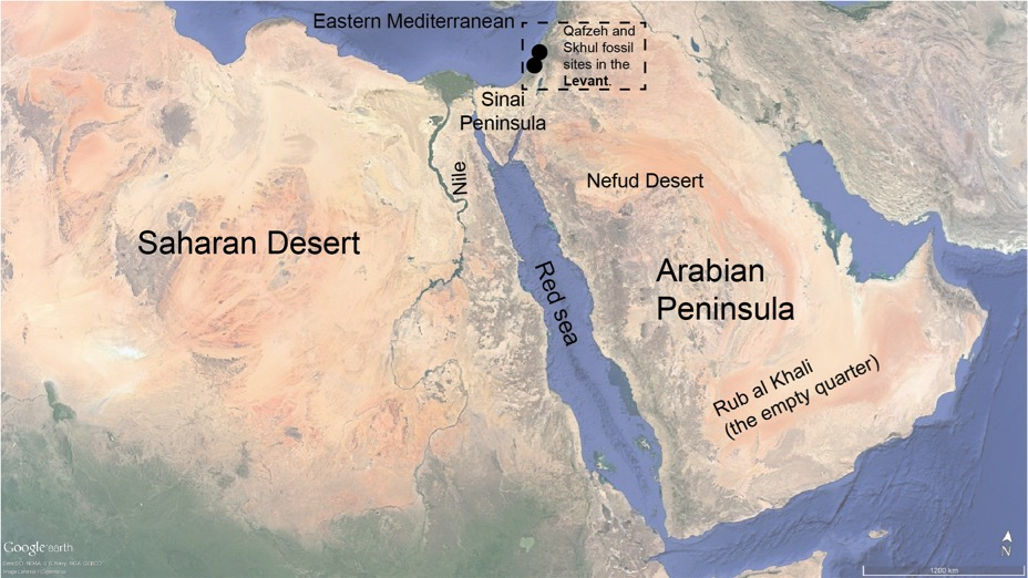 Breaking down barriers: green deserts and windows for Homo sapiens ...
